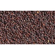 Mustard (கடுகு, Kadugu), 100g
